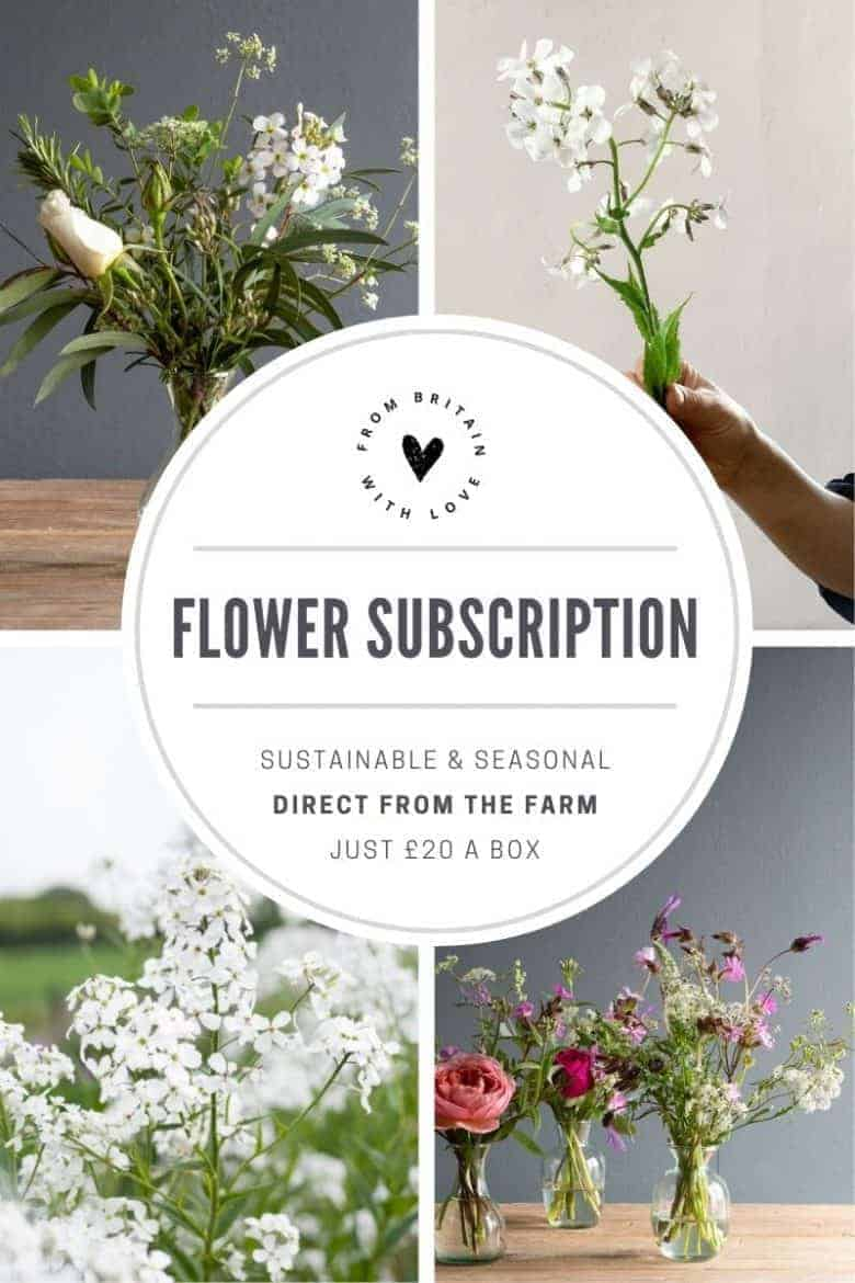 flower to vase subscription the real flower company - sustainable flowers in season direct from the farm including glass vase for just £20 a box - flowers include roses, honeysuckle, sweet rocket, lavender, mint, scabiosa, campion, orlaya, sweet peas, astrantia, scented geranium, purple basic herbs and foliage #flowersubscription #seasonal #sustainable #flowers